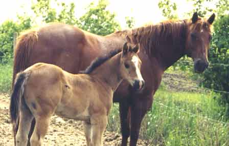 Bar Money Maudie with 2004 foal