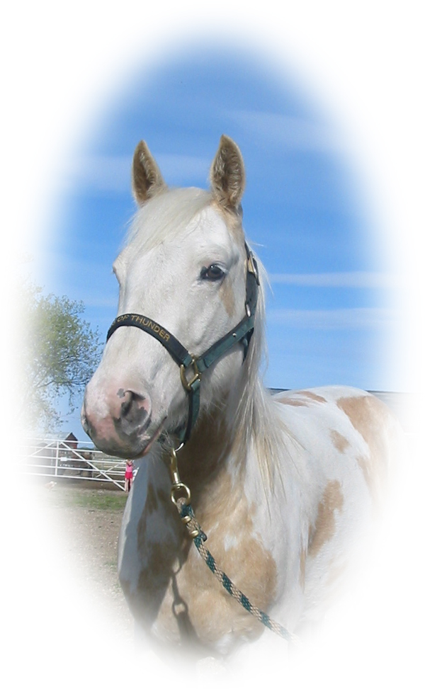 Skipper Jet McCue 2003 APHA Palomino Overo Filly