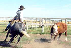 Tuff McCue Special - working cattle